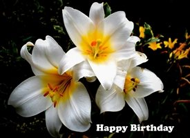 Birthday  white flowers, flowers, floral, garden personalised online greeting card