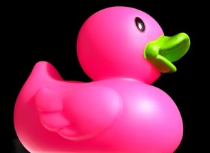 Carole Irving Art and Photography Quackers general duck