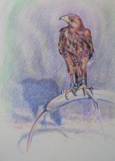 art hawk, bird of prey,  feathered friend. animals, harris, for-him, for-her personalised online greeting card