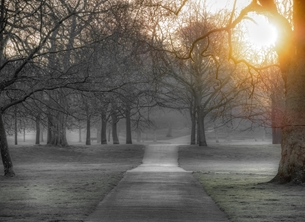 Greenwich Park at Sunrise