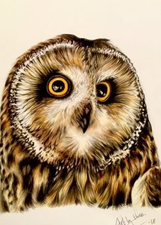 Art Owls birds feathers yellow brown eyes wings general dads mums him her blank all occasions animals wildlife for-him for-her  personalised online greeting card