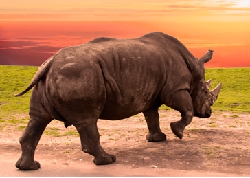 Photography Rhinoceros, Rhino, Horn, Africa, animal, wildlife, nature, photography, sunset, general,  personalised online greeting card