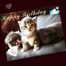 Birthday kitten, cats, pets animals personalised online greeting card