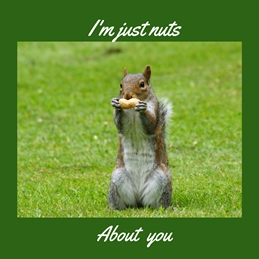 General Squirrel Nuts valentines anniversary birthday personalised online greeting card