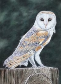General art Barn Owl wildlife bird  personalised online greeting card