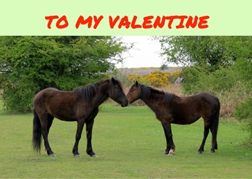Debbie Daylights Valentine ponies Valentine Valentines horses pony ponies animals new forest Hampshire for-her for-him personalised online greeting card