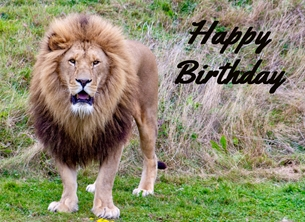 birthday Birthday, him, son, dad, grandad, Lion, animal, cat, nature, wildlife for-him for-child personalised online greeting card