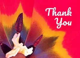 By Eva Thank You Flower thank tulip red yellow orange white black detail nature for-him for-her   personalised online greeting card