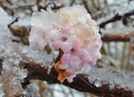 Photography winter flower pink ice snow for-him for-her  personalised online greeting card