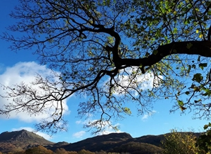 photography Branches, tree, sky blue, clouds, white, lake district,  multiple personalised online greeting card