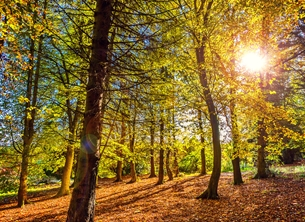 Photography andbc, woods, forest, trees, autumn, golden, sunshine, warm, serene, tranquil, peace, sympathy, hope, inspiration, Bangor, scenic, landscape, countryside, Northern Ireland, Ireland personalised online greeting card