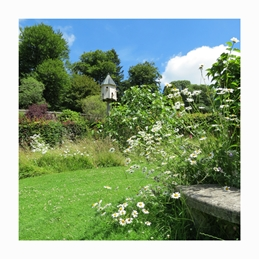 Photography dovecotes marguerites gardens flowers plants woodlands bench Colby Pembrokeshire Wales for-her personalised online greeting card