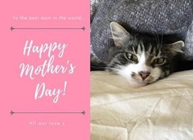 Mothers cheeky cat kitten animal cute love mum parent mother sweet personalised online greeting card