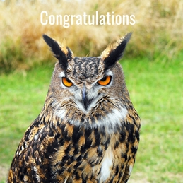 Gary Green Eyes Wise Old Owl congratulations Owl personalised online greeting card