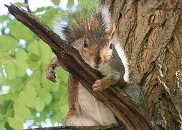 Photography squirrel fun generall tree happy funny comedy animal personalised online greeting card