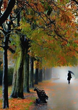 Photography park autumn trees lady umbrella silhouette landscape nature trees rain atmospheric sympathy birthday general personalised online greeting card