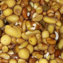 photography healthy sprouts beans germination natural brown tan young new food eating kitchen cooking z%a personalised online greeting card