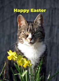 Easter  cat daffodils flowers personalised online greeting card