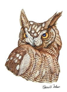 Great horned owl watercolour