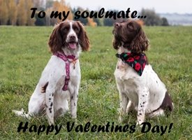 Valentine Dog spaniel cute SARR personalised online greeting card