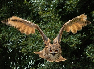 ^eagle owl^, ^falconry^ personalised online greeting card