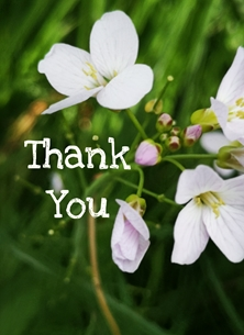 Thank Thank you, female, blossom, flower, pink,  personalised online greeting card
