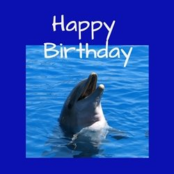 Debbie Daylights Birthday dolphin Birthday dolphins mammals water wildlife sealife for-child for-her for-him husband wife son daughter personalised online greeting card