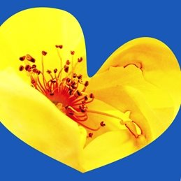 General heart love yellow blue red orange flowers bold for-him for-her for-child personalised online greeting card