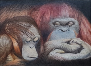 Art general orangutan, animal. wildlife, art, artistic, ape, mothers day, new mother personalised online greeting card
