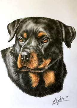 Art rottweilers rottie dogs pets animals for-him personalised online greeting card