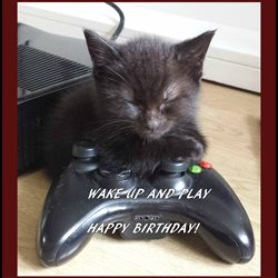 Birthday cats games animals z%a personalised online greeting card