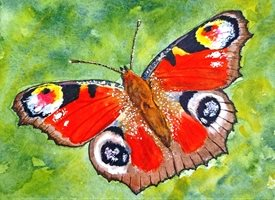 artwork butterfly insects wildlife for-her for-him personalised online greeting card