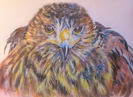 General hawk, bird, bird of prey, birds, hawks, Harris hawks, for-him, for-her personalised online greeting card