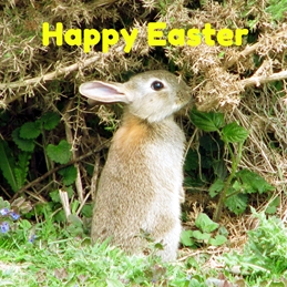 Debbie Daylights Easter Bunny Easter Easter bunny rabbits wildlife animals personalised online greeting card