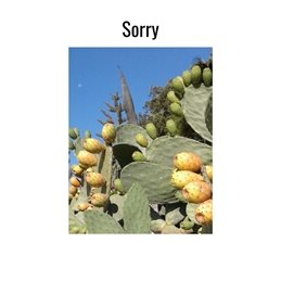 Sorry apology fruits pear blue sky personalised online greeting card