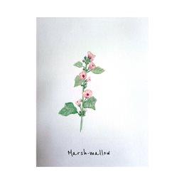 General Herbs plants pink flowers watercolour personalised online greeting card