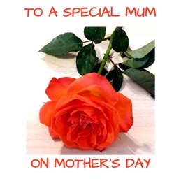 Mothers rose,flowers,mum,mother,red,green personalised online greeting card