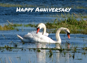 Debbie Daylights Anniversary swans swans, lake, river,  personalised online greeting card