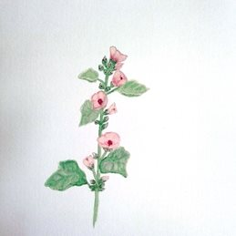 general art Herbs plants pink flowers watercolour for-her personalised online greeting card