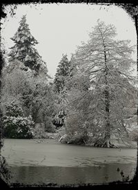 Photography snow trees z%a personalised online greeting card