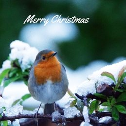 Christmas Robin Merry christmas