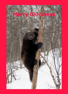 Christmas wolverines bears weasels animals mammals winter snow arctic  personalised online greeting card