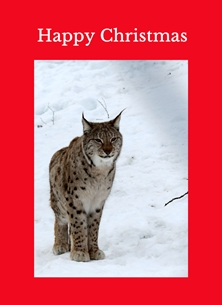 christmas lynx animals mammals winter snow spots Norway woods personalised online greeting card
