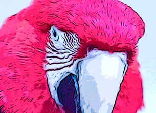 art Parrot, red, close, beak, eye, Birthday,  his, her, female, girls, boys, daughter, mother,  birds for-him for-her for-child personalised online greeting card