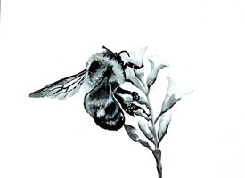 General artwork bee wildlife insects monochrome for-him for-her personalised online greeting card