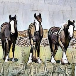 general horse, three, cumbria ,lake district, fells,  personalised online greeting card