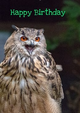 Birthday Birthday. Eagle owl, bird, nature, wildlife photography birds his her for-him for-her  personalised online greeting card