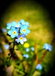 Photography forget-me-not flowers spring blue green yellow garden   mum daughter Nan aunt friend for-her personalised online greeting card