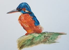 General Kingfisher animal bird watercolour art blue red personalised online greeting card