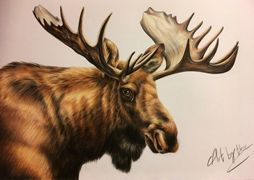 moose, animals, wildlife, elk, antlers personalised online greeting card